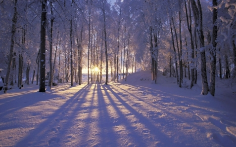 winter snow forest sunlight 1920x1200 wallpaper_www.wallpaperfo.com_11